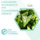 Dissuasore BioDinamico per la Flavescenza dorata- 1 lt