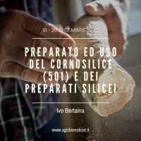 PREPARATO ED USO DEL CORNOSILICE (501) E DEI PREPARATI SILICEI