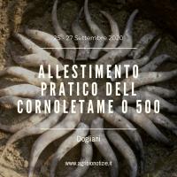 ALLESTIMENTO PRATICO DEL CORNOLETAME O 500