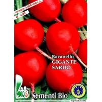 RAVANELLO GIGANTE SARDO ROSSO - BIOSEME 3701