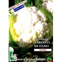 CAVOLFIORE TARDIVO DI FANO - BIOSEME 1103