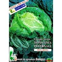 CAVOLO VERZA PIACENZA INVERNALE - BIOSEME 1502