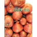 AGLIO SCALOGNO TONDO IN BULBI - BIOSEME 0105