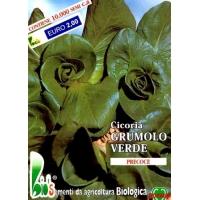 CICORIA GRUMOLO VERDE - BIOSEME 1818