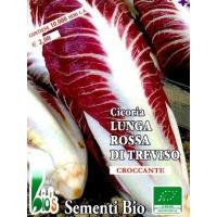CICORIA ROSSA LUNGA TREVISO - BIOSEME 1819
