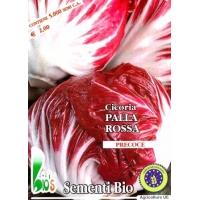CICORIA PALLA ROSSA 3 - BIOSEME 1820