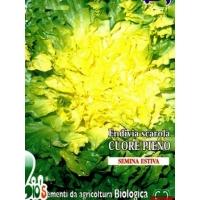 ENDIVIA SCAROLA A CUORE PIENO - BIOSEME 2201