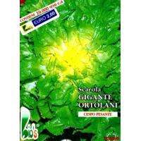 ENDIVIA SCAROLA GIGANTE DEGLI ORTOLANI - BIOSEME 2205