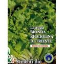 LATTUGA BIONDA RICCIOLINA DI TRIESTE- BIOSEME 2757